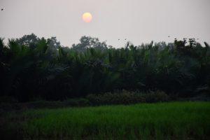 Forest - Sundarbans, Bangladesh